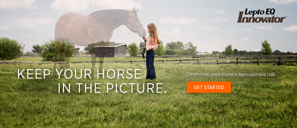 KEEP YOUR HORSE IN THE PICTURE