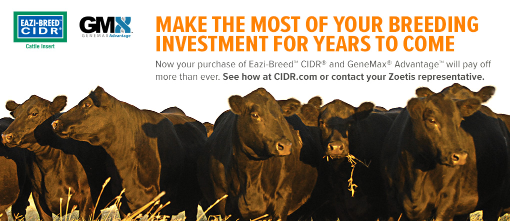 NEW EAZI-BREED CIDR & GENEMAX ADVANTAGE PROMOTION AT CIDR.COM