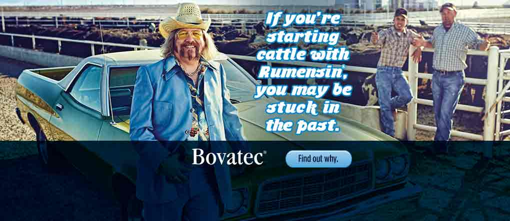 START CATTLE WITH BOVATEC
