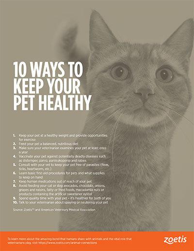 animal health infographic: 10 ways to keep your pet healthy