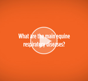 What are the mian equine respiratory diseases?