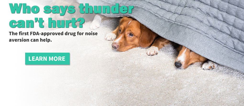 Loud noises can be scary.