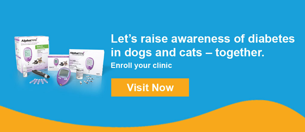 Pet Diabetes Month for Dogs and Cats | Pet Diabetes Month