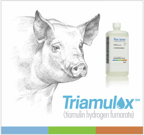 Triamulox Liquid Concentrate is a formulation of tiamulin hydrogen fumarate for the treatment of swine dysentry and swine pnemonia in pigs.