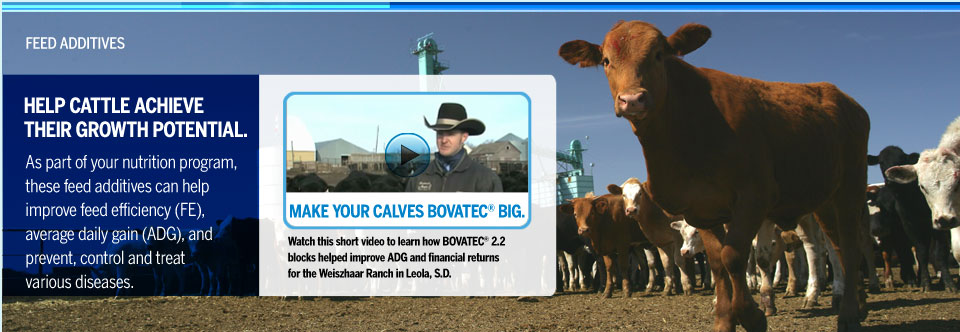 Help Cattle Achieve Their Growth Potential