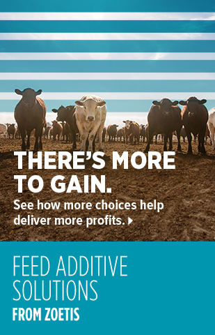 Feed Additive Banner