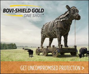 Bovi Shirl Gold One Shot Ad