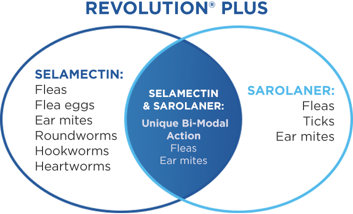 Selamectin and Sarolaner Deliver Even Broader Protection Against Parasites