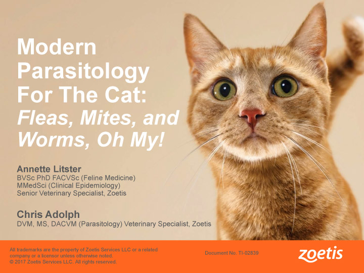 AAFP Webinar Summary—Modern Parasitology for the Cat