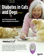 Diabetes in Dog, Diabetes in Dogs, Diabetes Cat