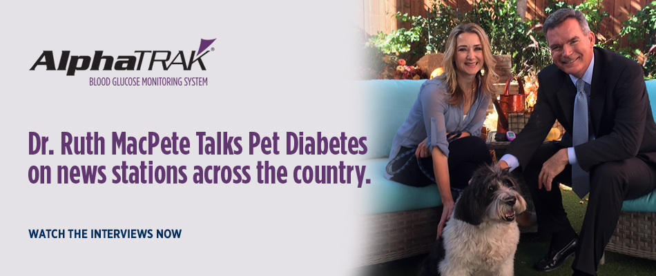 Dr. Ruth MacPete Talks Diabetes in Dogs and Cats on NEWS Stations across the country
