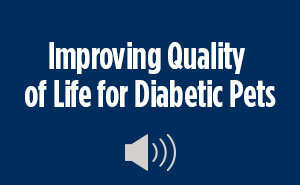 Improving Quality of Life for Diabetics Pets