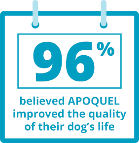 96 percent believed APOQUEL improved the quality of their dog's life