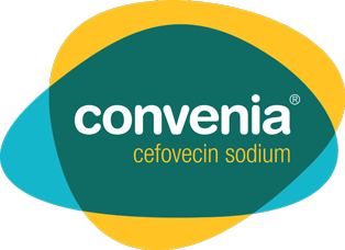 CONVENIA Antibiotic Treatment for Canine & Feline Skin Infections ...
