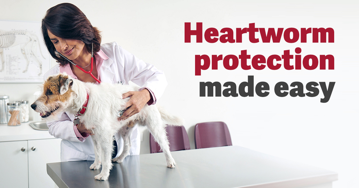 Easy Heartworm Protection