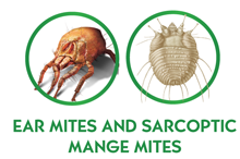 Ear Mites and Sarcoptic Mange Mites