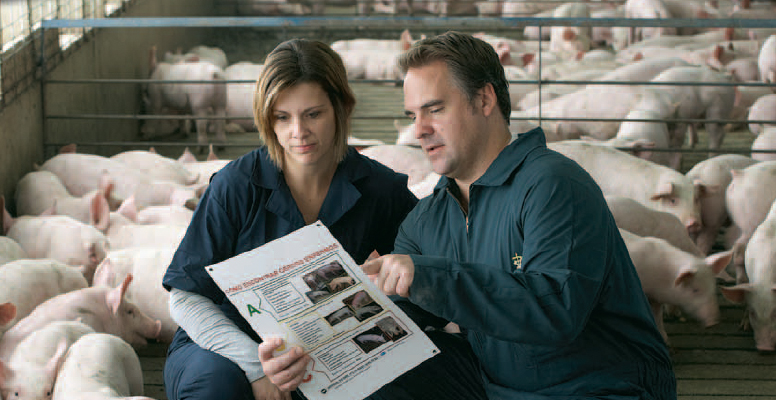 Male and female veterinarians looking at a information on paper surrounded by swine