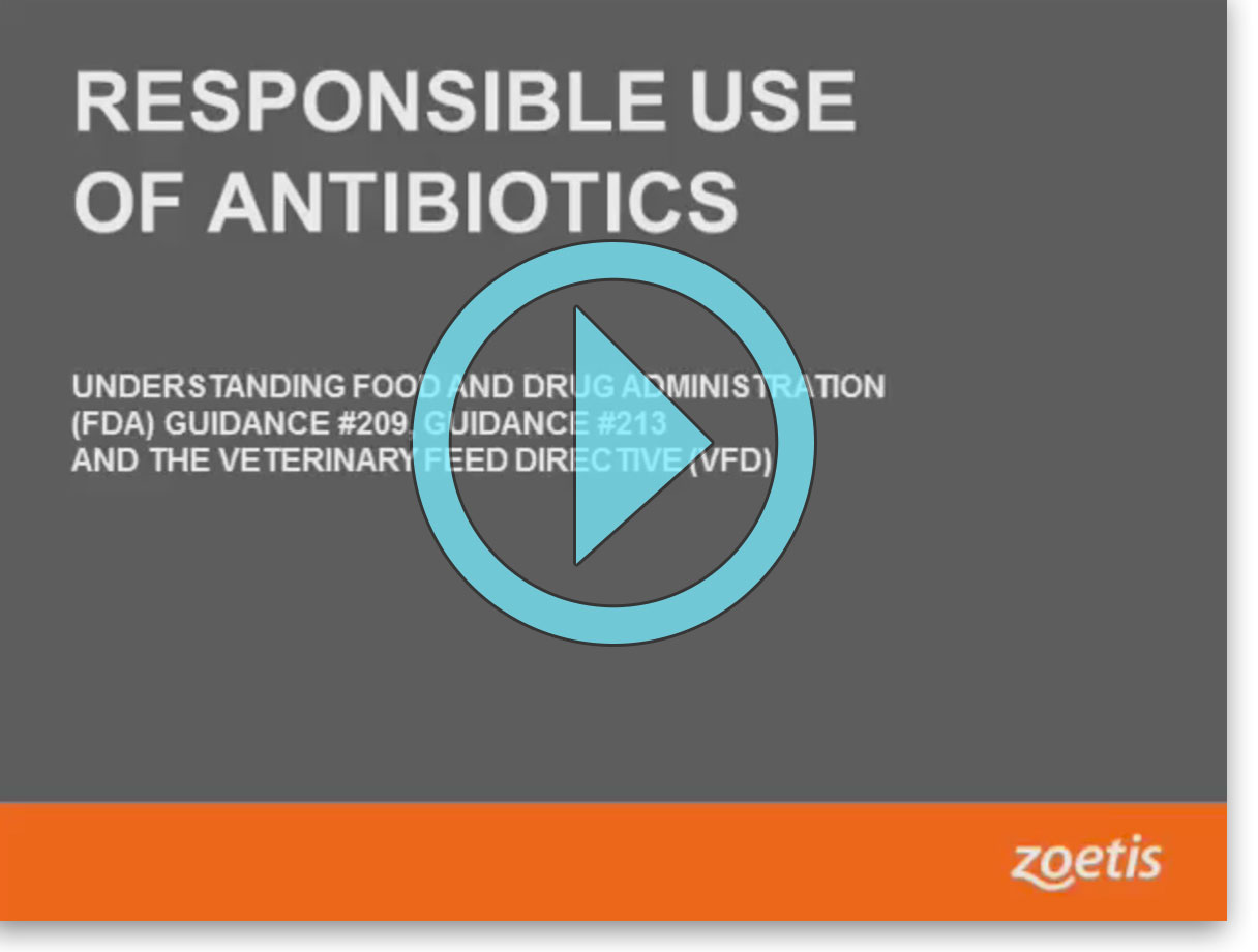 Veterinary Feed Directives | Zoetis US